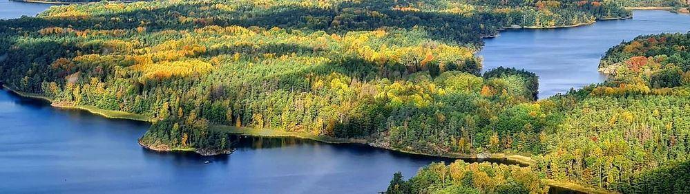 Bild på skog från ovan.JPG
