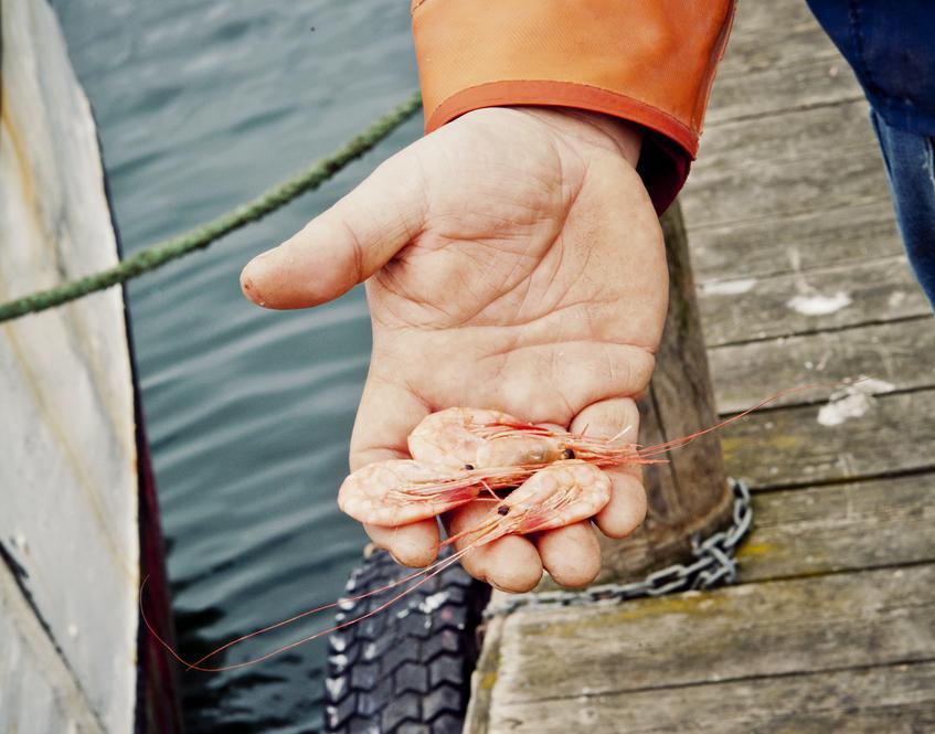 rakor-yrkesfiske--maja-kristin-nylander-omslag.jpg